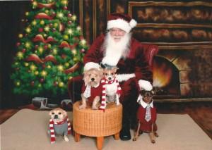 Santa Photos at Pet Adventure Mountlake Terrace