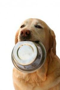 Pet Adventure Frequent Buyer Program hungry dog